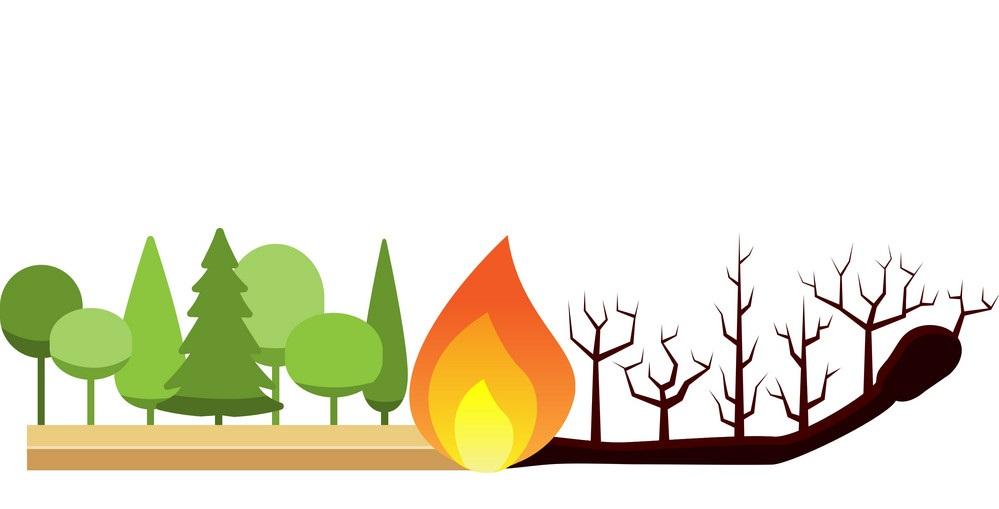 Сохраним лесные богатства от пожаров