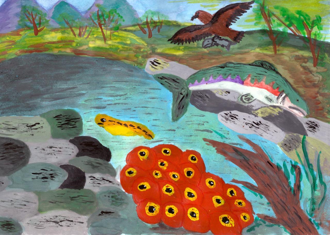 Подведены итоги первого этапа конкурса рисунков, посвященного Международному дню мигрирующих рыб 2020.